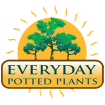 Everyday Potted Plants